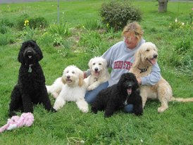 Goldendoodles by Ellie - Ellie's Home